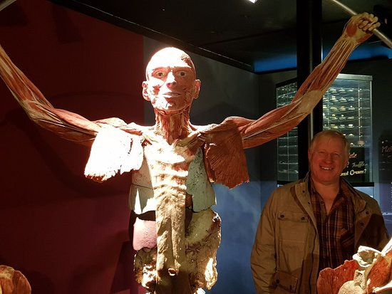 Body Worlds Museum - Anatomy of happiness