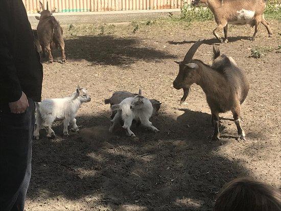 Santa Fe Springs, CA: Hathaway Ranch Museum