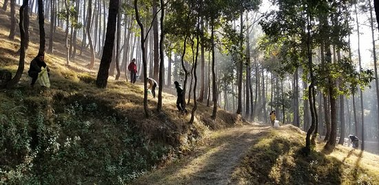 Changunarayan, Nepal: bosque