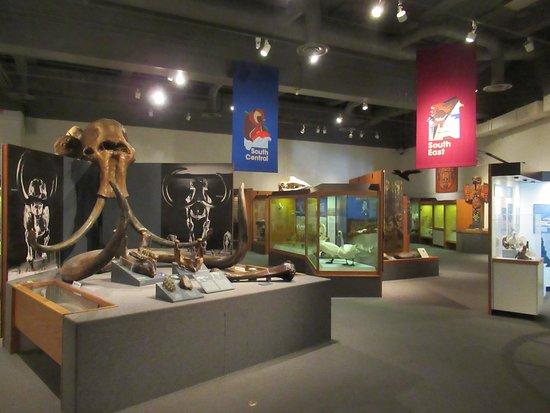 University of Alaska Museum of the North: Alaska Part