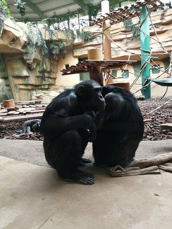Zoo de la Palmyre : IMG_20180409_143217_large.jpg