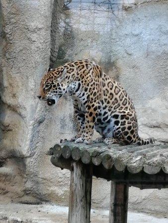 Zoo de la Palmyre : IMG_20180409_095143_large.jpg