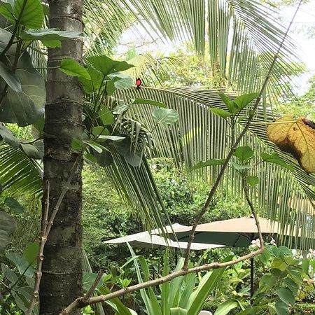 Pavones, كوستاريكا: photo0.jpg