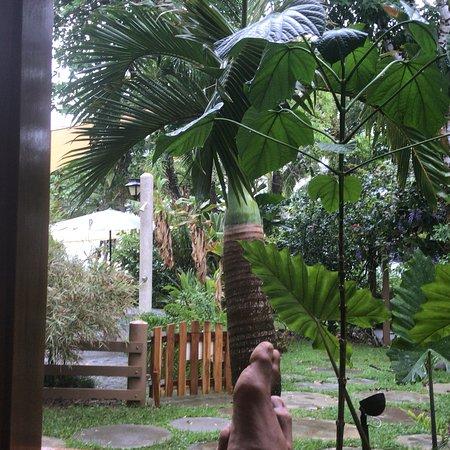 Pavones, كوستاريكا: photo2.jpg