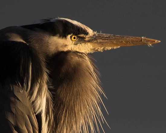 Washougal, WA: There is also Heron rookery on the refuge.