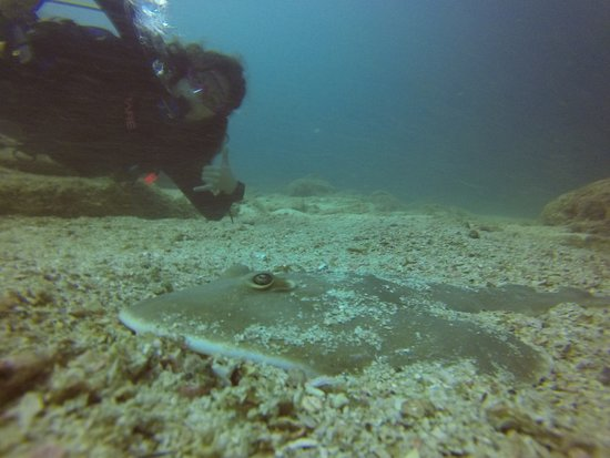 Sirenas Diving Costa Rica: Diver with shovel ray