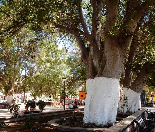 La Mision de San Ignacio: Square across from the mission.