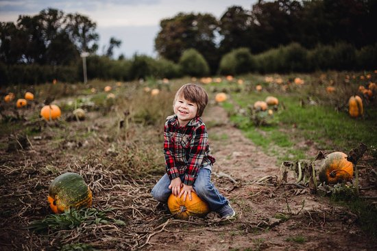 Fennville, MI: Visit one of our pumpkin patches in October
