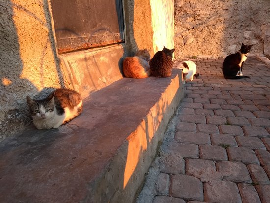 Moulay Idriss, Morocco: Cat courtyard at top of mountain.