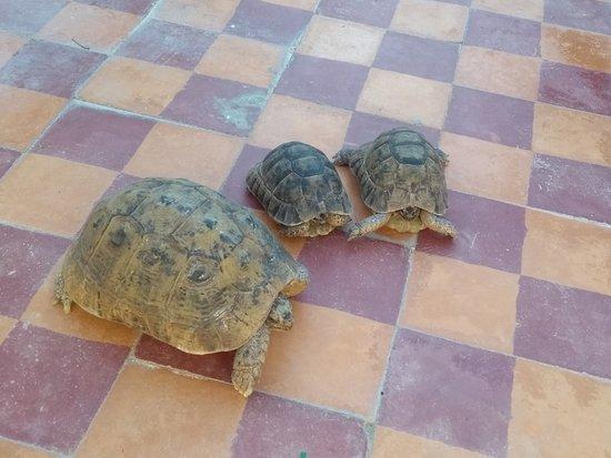 Moulay Idriss, โมร็อกโก: The turtles upstairs.
