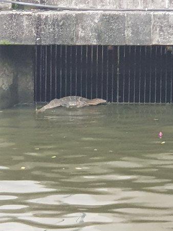 Malacca River: 20180410_185519_large.jpg