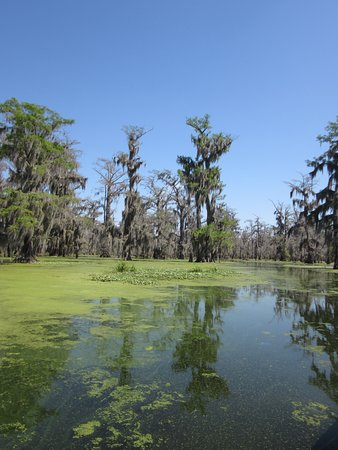 Swamp Tours Of Acadiana
