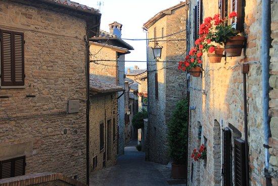 Montone Image