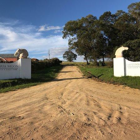 Outeniqua Moon Percheron Stud and Guest Farm Picture