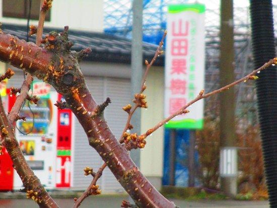 Yamada Orchard