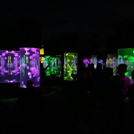 Manila Ocean Park: jellyfish room