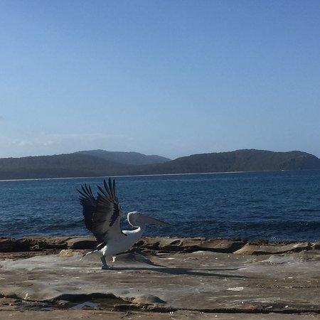 South Durras, Australia: photo4.jpg