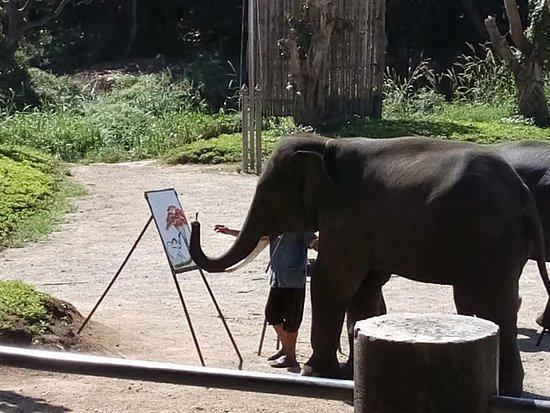 ปางช้างแม่แตง: Elephant Painting