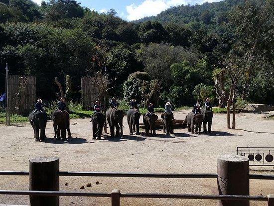 ปางช้างแม่แตง: To a standing ovation