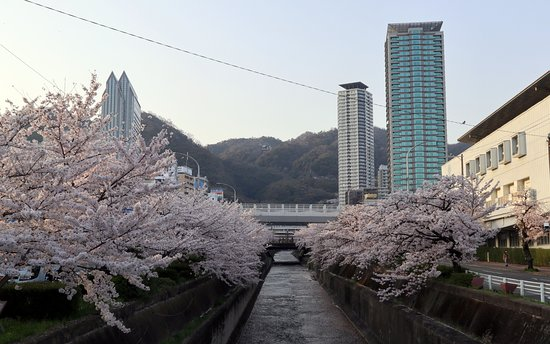 Kobe, Japan: 桜並木と新神戸のタワービル