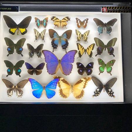 Creation Museum : photo2.jpg