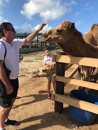 animal garden. Philip\u0027s Animal Garden (Noord) - 2018 All You Need To Know Before Go (with Photos) TripAdvisor