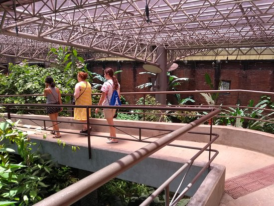 Museo Nacional De Costa Rica: Exiting through the butterfly conservatory.