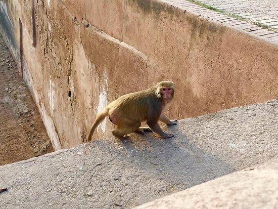 Forte Agra: Agra Fort