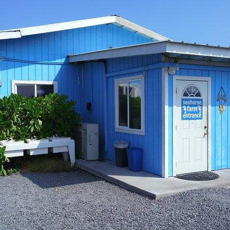 Ocean Rider Seahorse Farm : photo0.jpg