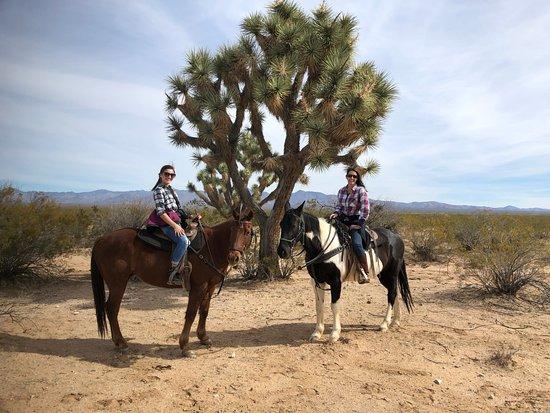 Gambar Yucca