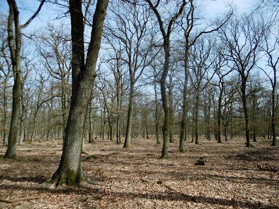 Wesel, Duitsland: Stieleichenwald Diersfordter Wald