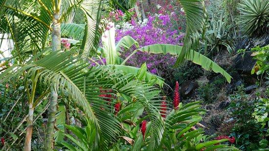 La Koumbala: Garten