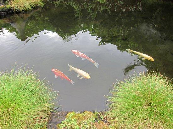Hana Kai Maui: coy pool