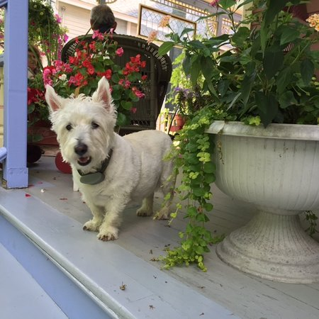 Rose & Thistle Bed & Breakfast: Morgan, The Guest Greeter