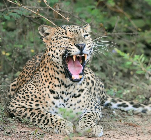 Yala Wild Safaris