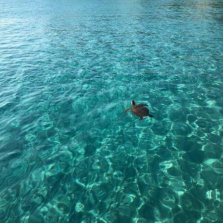 Playa Kenepa Chiki: photo2.jpg