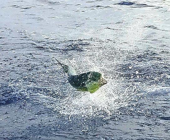 Puerto Vallarta Fishing - Capt Pete: dorado fishing in Puerto Vallarta Mexico