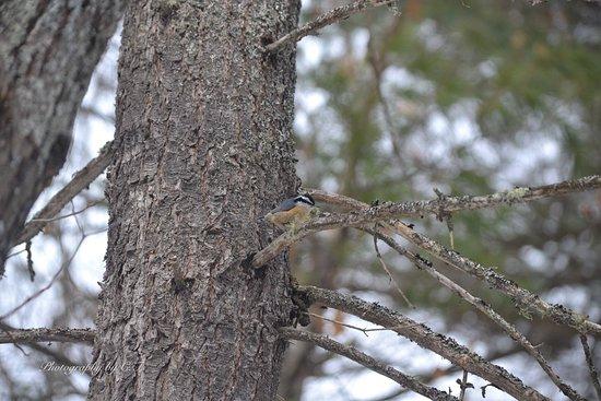 Calabogie, Kanada: Hard to capture these little birds