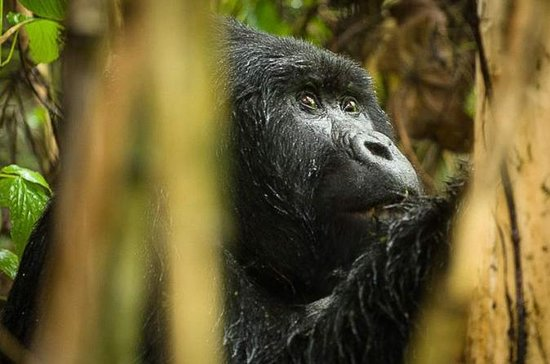 3-Day Gorilla Trekking plus...