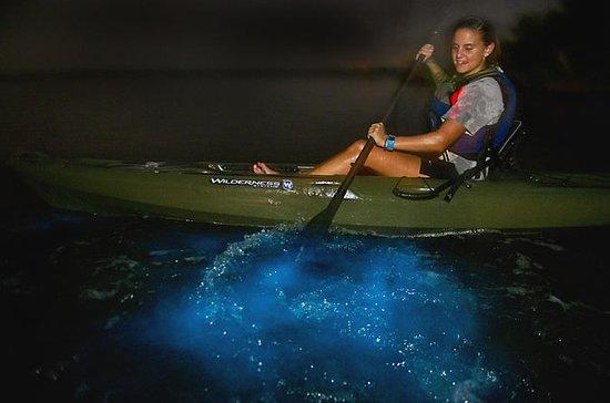 Dinoflagellate Bioluminescence Kayak...