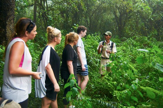 Bali Jungle Rain Forest Trekking