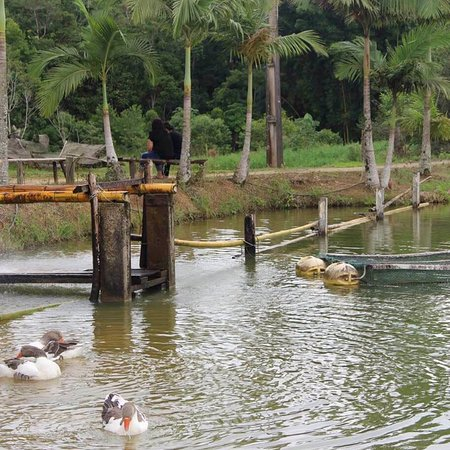 Jacupiranga, SP: Em Jacupiranga, interior de SP, você precisa conhecer o ( PESQUE e PAGUE pousada olho d'agua ) F