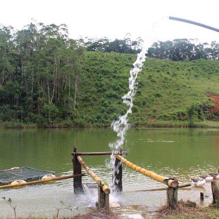 Em Jacupiranga, interior de SP, você precisa conhecer o ( PESQUE e PAGUE pousada olho d'agua ) F