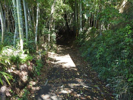 Takiyama Park, Takiyama Castle Remains