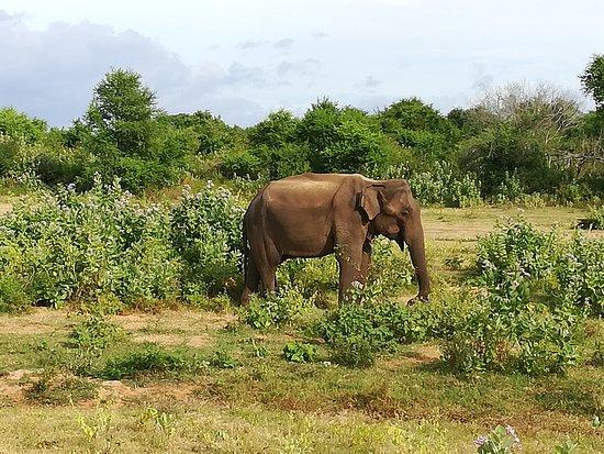 Southern Province, ศรีลังกา: Udawalava National Park