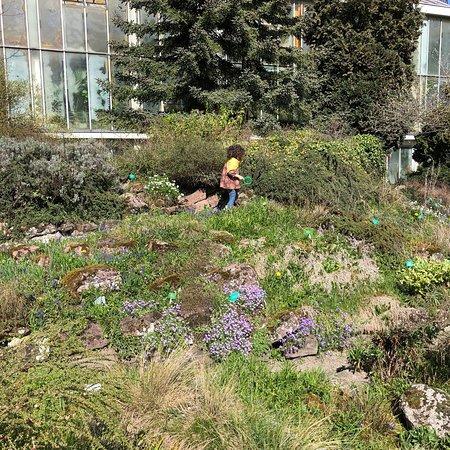 Jardin botanique de l 39 universit de strasbourg 2018 ce - Jardin botanique de l universite de strasbourg ...