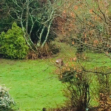 Woodlands, UK: photo0.jpg