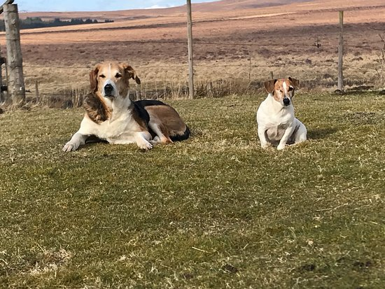 Kinbrace, UK: The Garvault is Pet Friendly