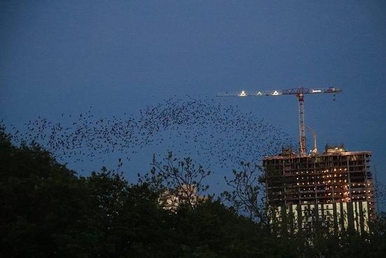 Some many bats