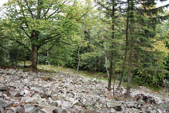 Rezerwat przyrody Szczytniak